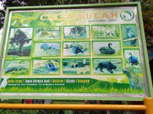 Kebun Binatang Cikembulan Garut 1